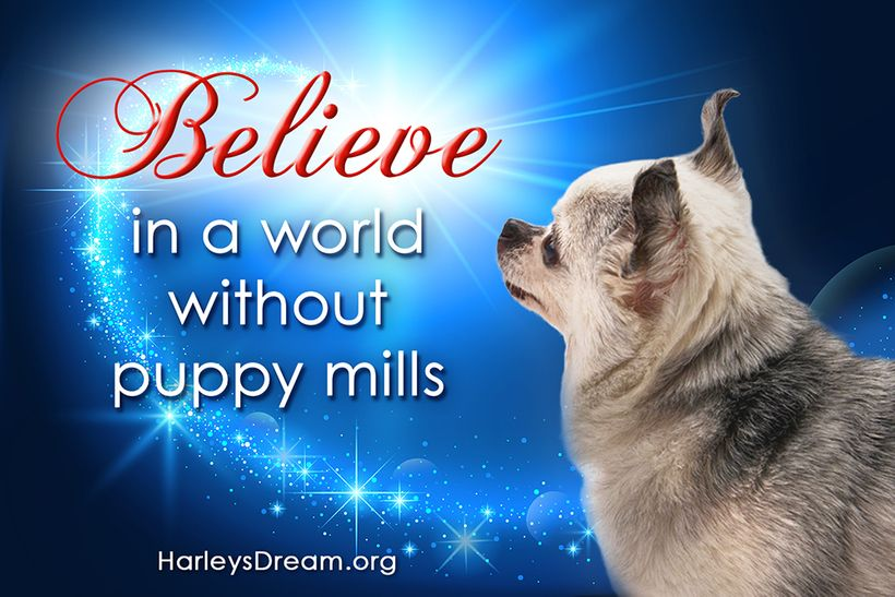 Teddy spent 7 years in a small cage in a puppy mill before he was freed and found a loving home. He is now a voice for the hu