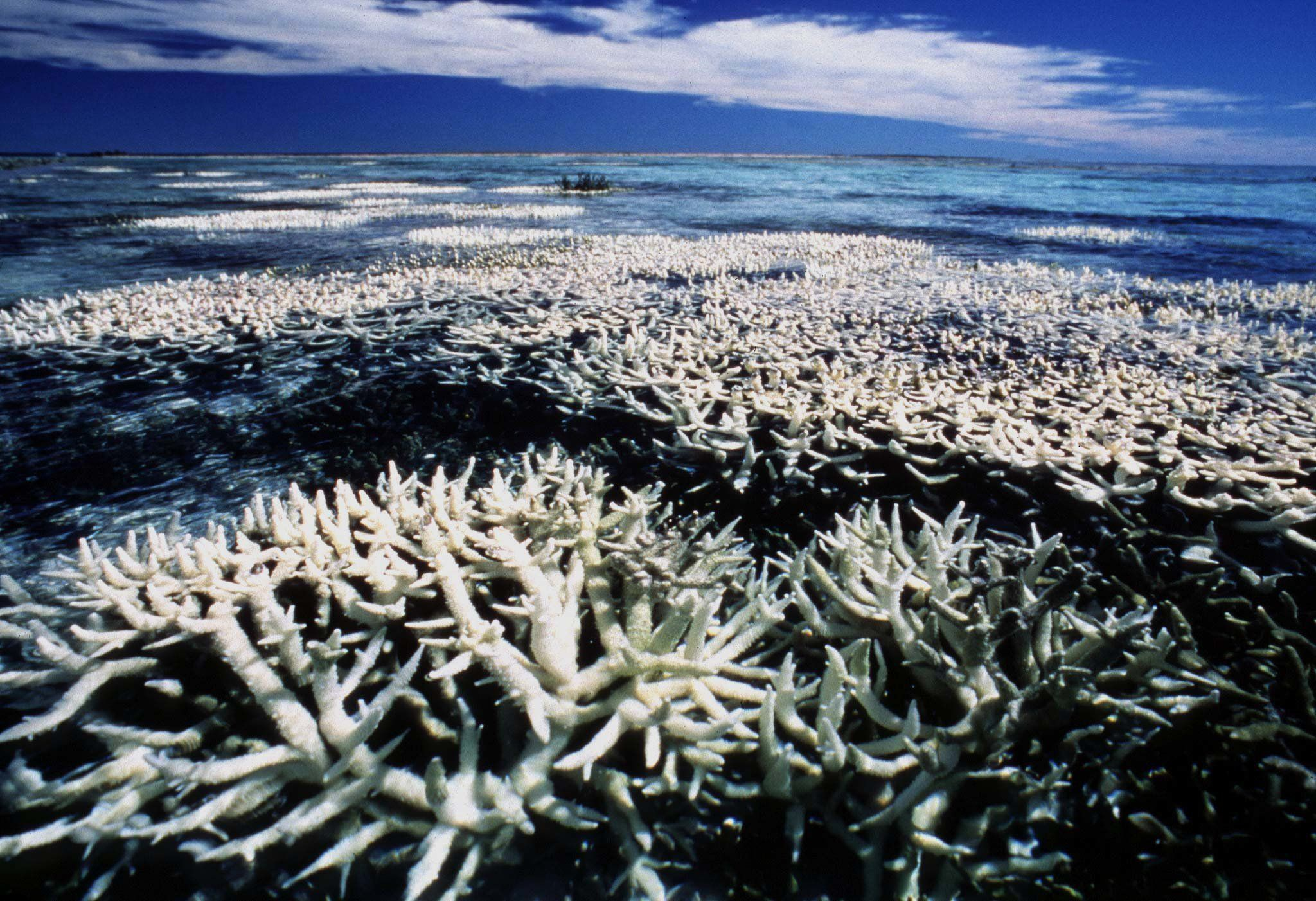 Coral Transplant Success Could Be A Ray Of Hope For The Great Barrier