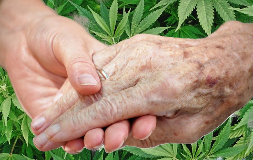Medical Cannabis could ease suffering and improve quality of life, but Florida nursing homes are stopping nursing home reside