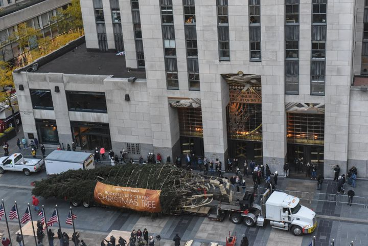 The 75-foot Norway Spruce will be lit on Wednesday.