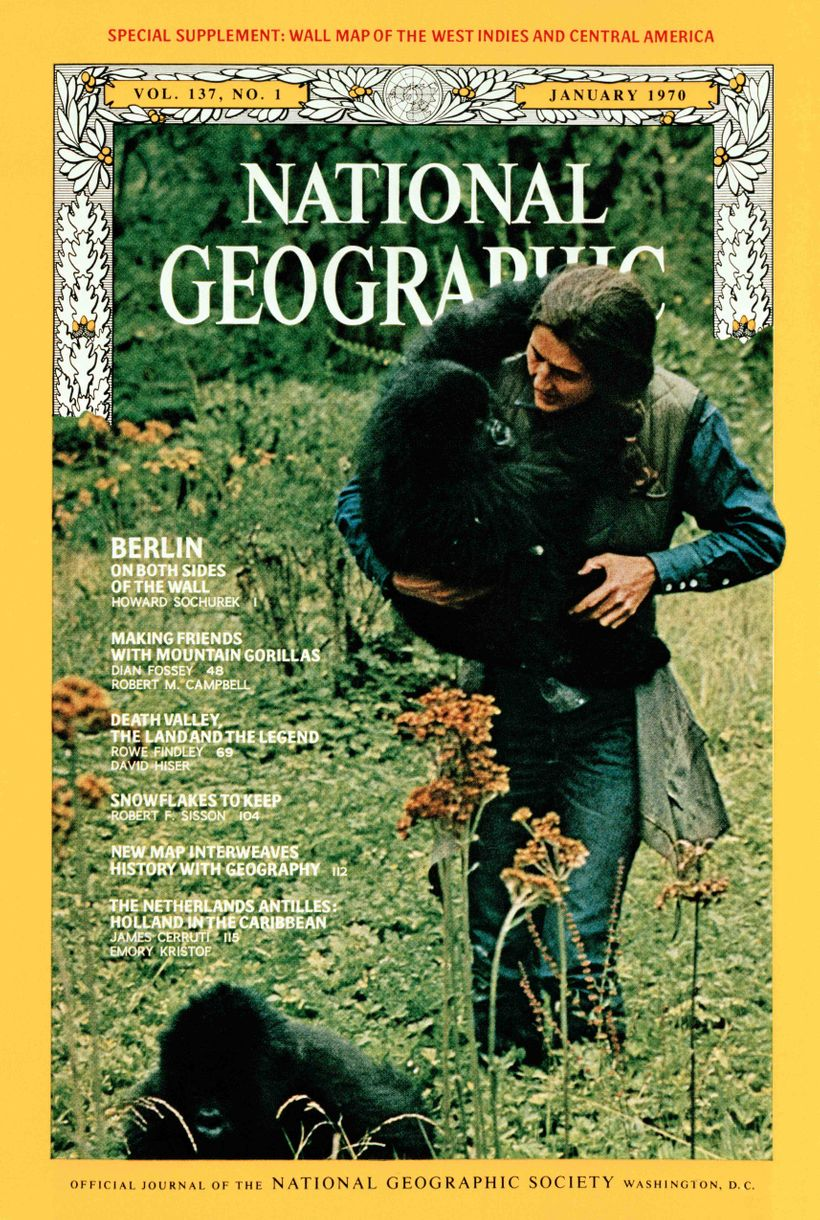 <em>Coco</em> and <em>Pucker, </em>the gorilla orphans<em>,</em> survived because they loved Dian Fossey as their mother.