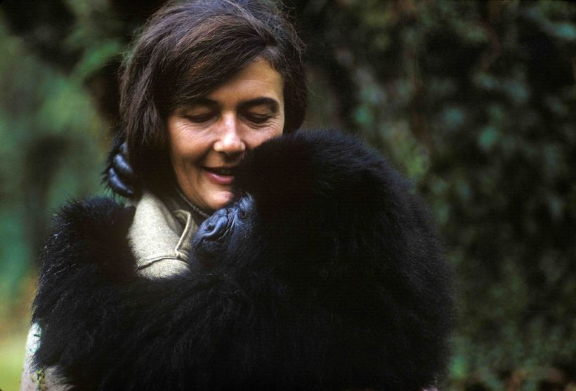 <em>Secrets in the Mist</em> offers an intimate account of the life and legacy of the iconic primatologist Dr Dian Fossey, 32
