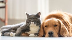 It's Official, Dogs Are Brainier Than Cats