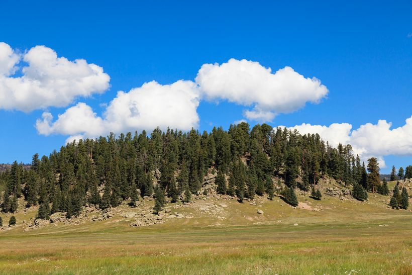 <em>Hillock at Valles Caldera National Preserve. The Rio Grande Water Fund is will generate sustainable funding for a 10-30 y