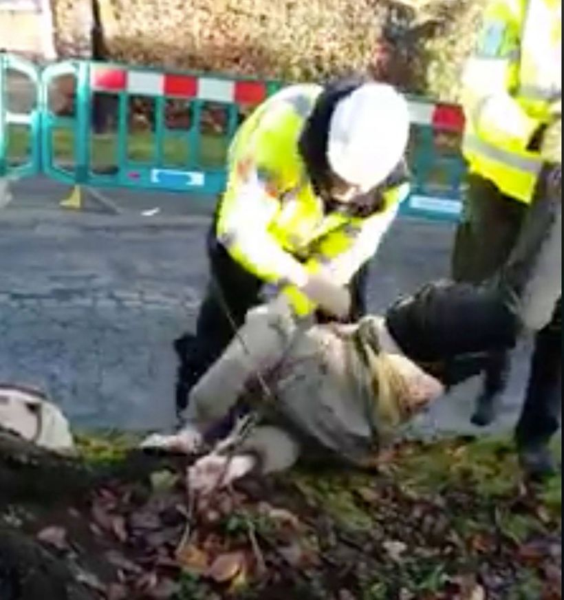 Protector dragged away from tree , purchased by residents, about to be decorated for annual Christmas event. (Abbeydale Park