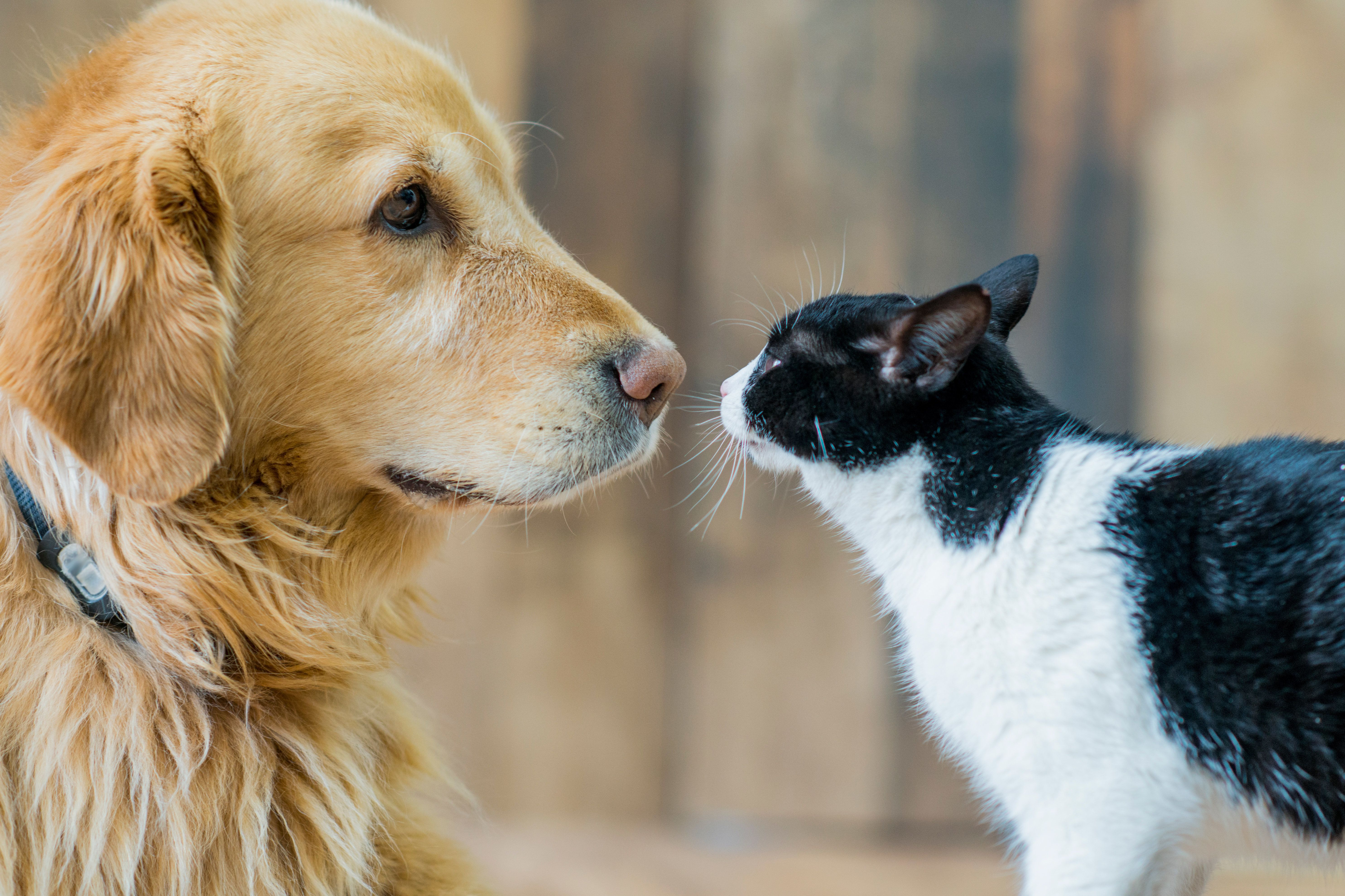 Did A Viral Study 'Prove' Dogs Are Smarter Than Cats? Not