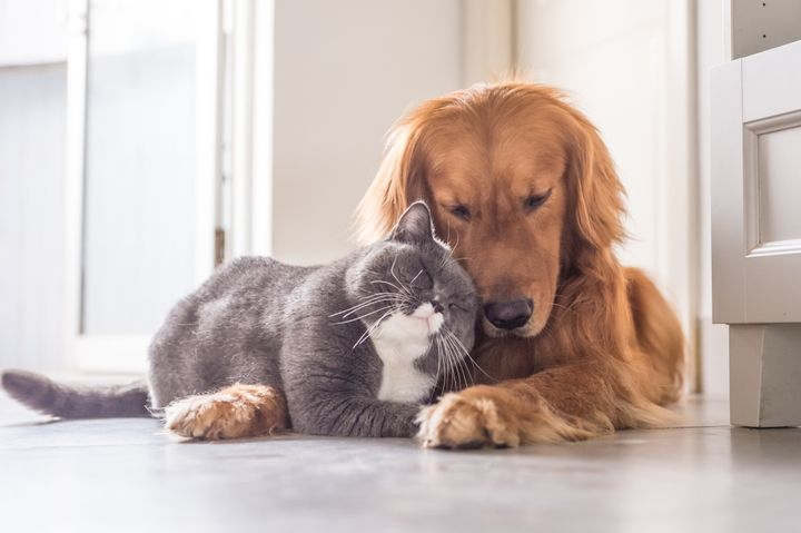 Dogs Are Smarter Than Cats Study