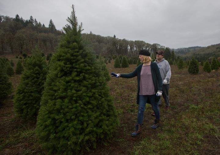 A couple searches for a Christmas tree at a farm in Oregon on Nov. 25.