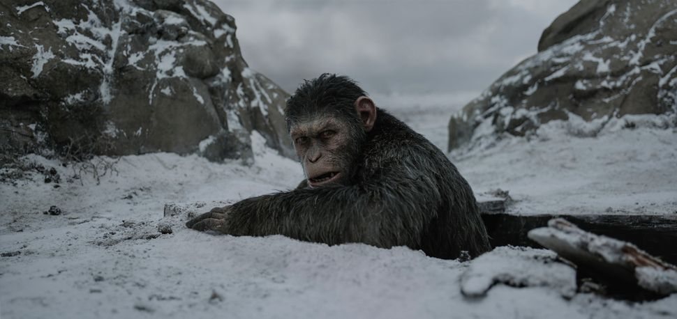 "The monkey movies shouldn't have been this good, but somehow ""War for Planet of the Apes"" was even more existential and"