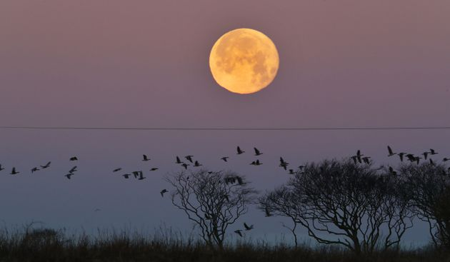 Supermoon in Whitley Bay,