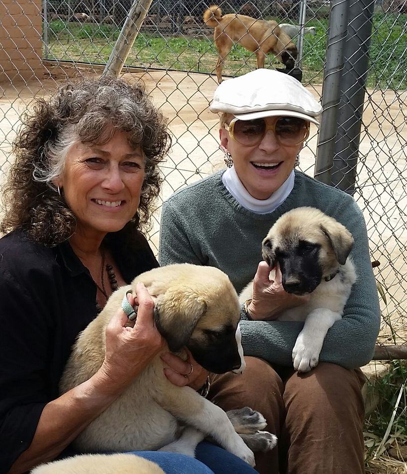 Princess Michael of Kent visits CCF's Model Farm and Livestock Guarding Dogs with Dr. Laurie Marker.