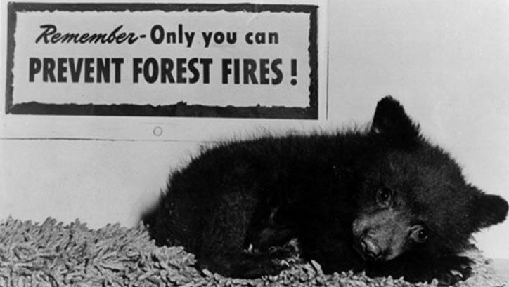 """The real Smokey Bear featured in ad campaigns from 1975-1990, via <a rel=""""nofollow"""" href=""""https://smokeybear.com/en/smokeys-h"""