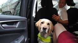 Why Is The Government Still Failing To Protect Assistance Dog Owners From Frequent Taxi And Minicab