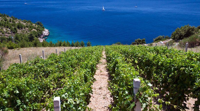 Stina Winery on the island of Brač