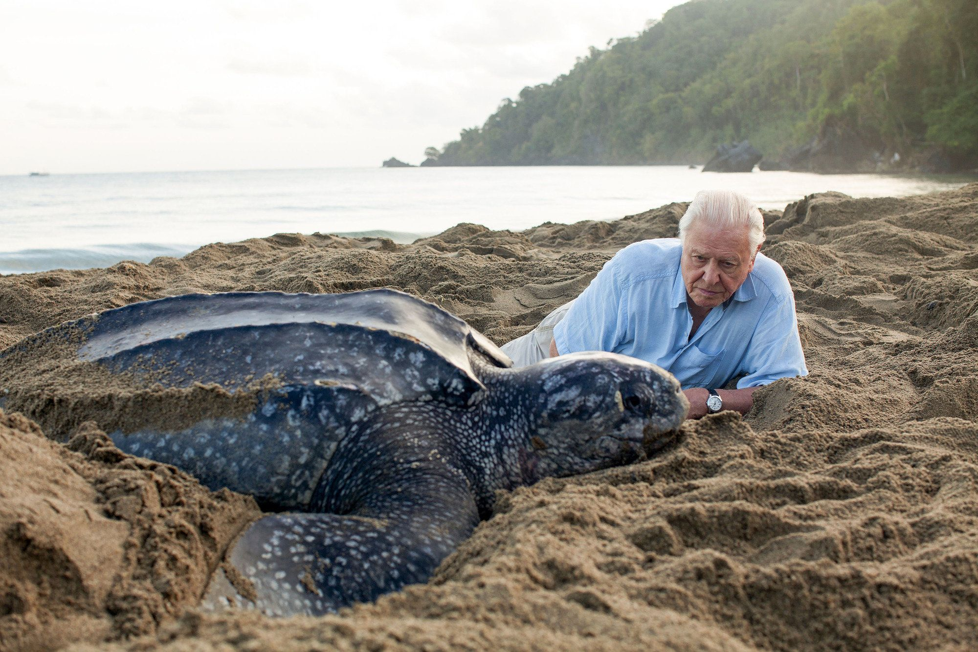 David Attenborough Warns Oceans Are Under Threat 'As Never Before In Human
