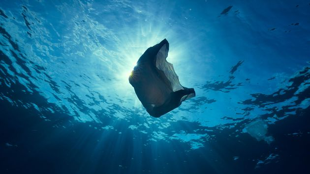 Plastic waste is having a devastating effect on the