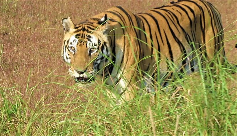 """Loved watching king of the jungle """"Munna"""""""