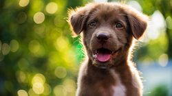 Government Must Claw Back Animal Protection Cred After Sentience Row - And We Know