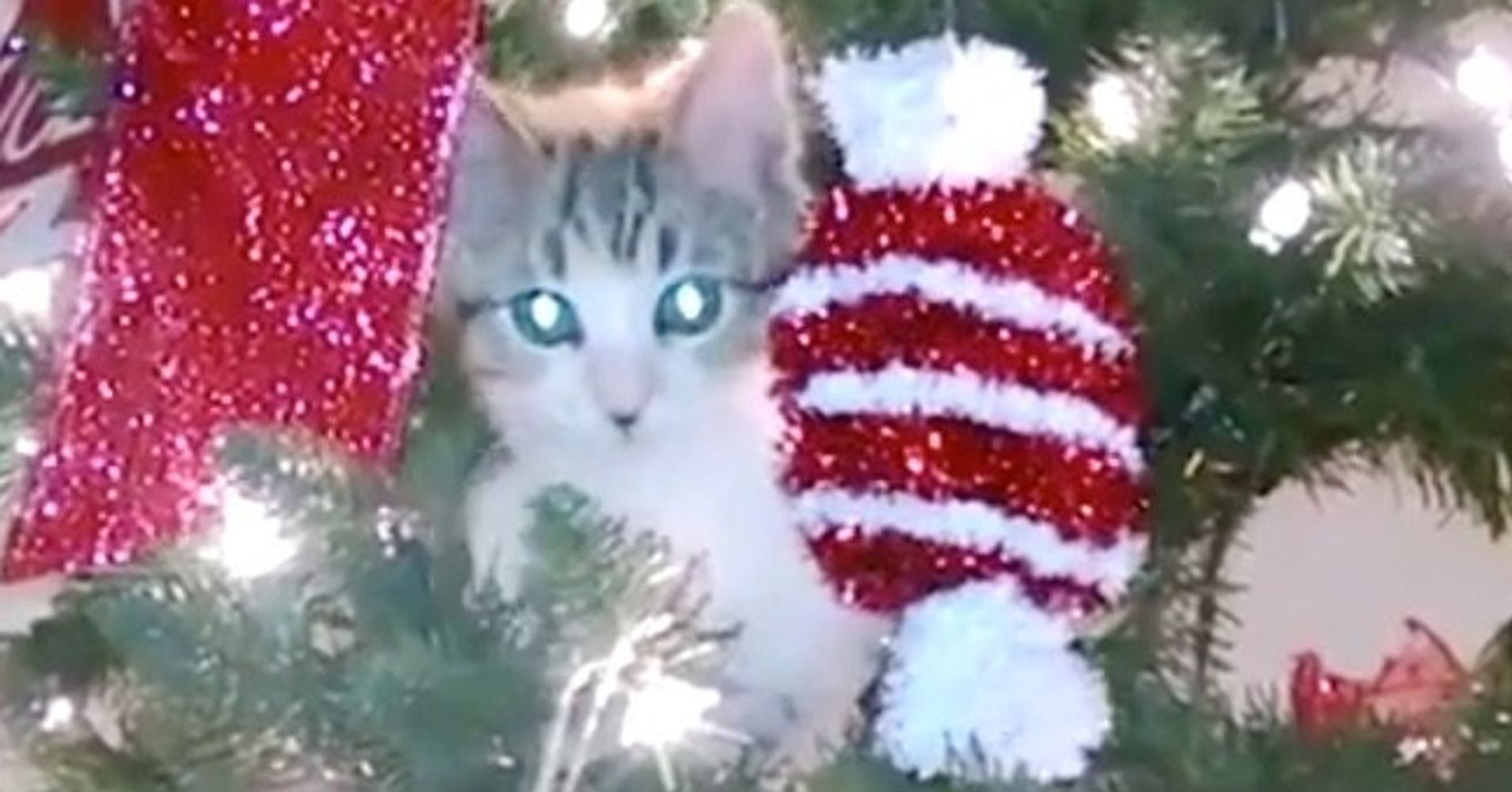 Cats vs. Christmas Trees Supercut Shows Felines At Their Holiday ...