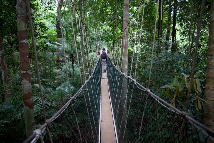 Eco-tourists walk on canopy walkways in a rainforest in Pahang.