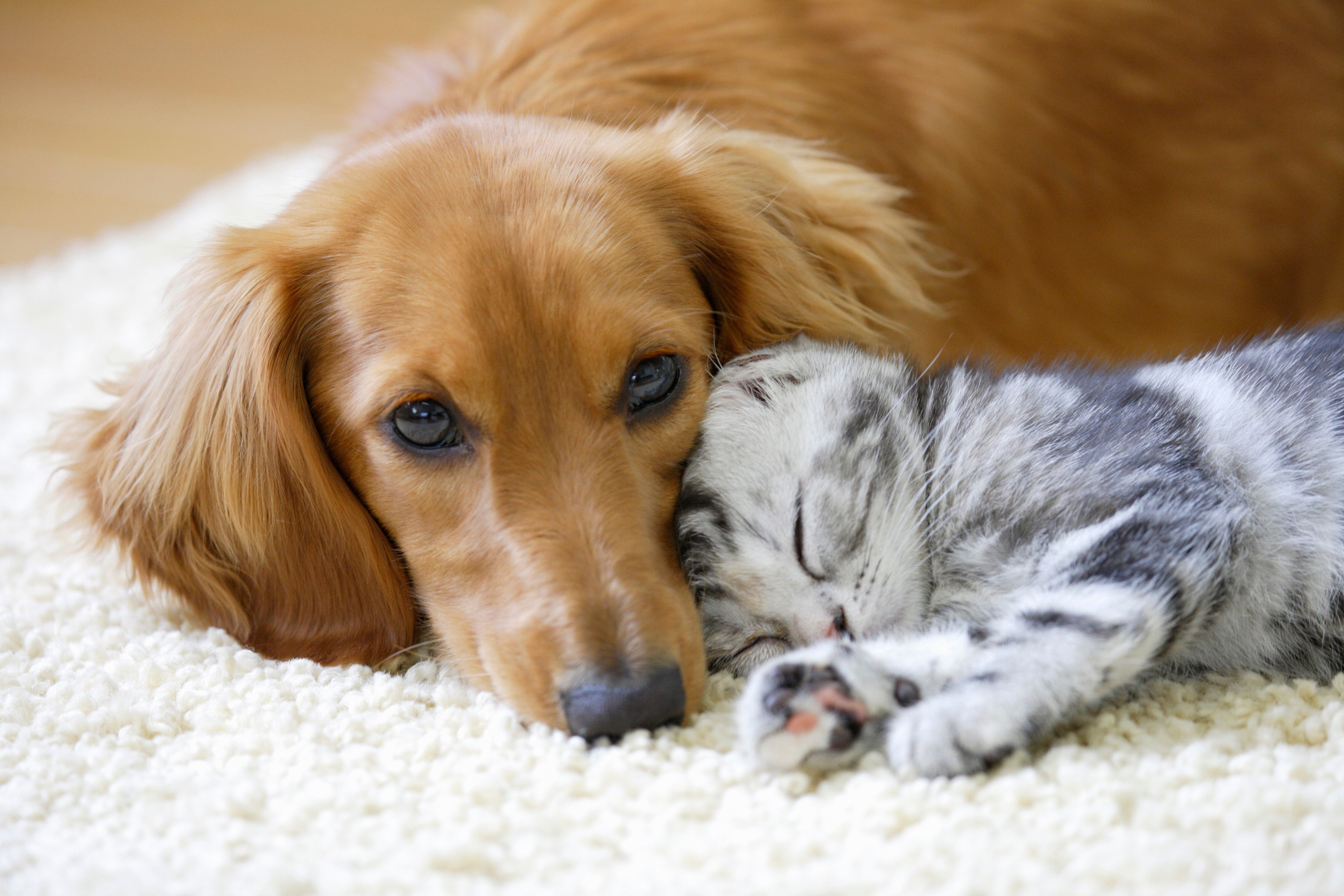 Pet Name Inspiration: The Most Popular Cat And Dog Names Of 2017