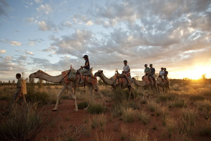 <p><strong>Camel Riding In The Outback</strong></p>