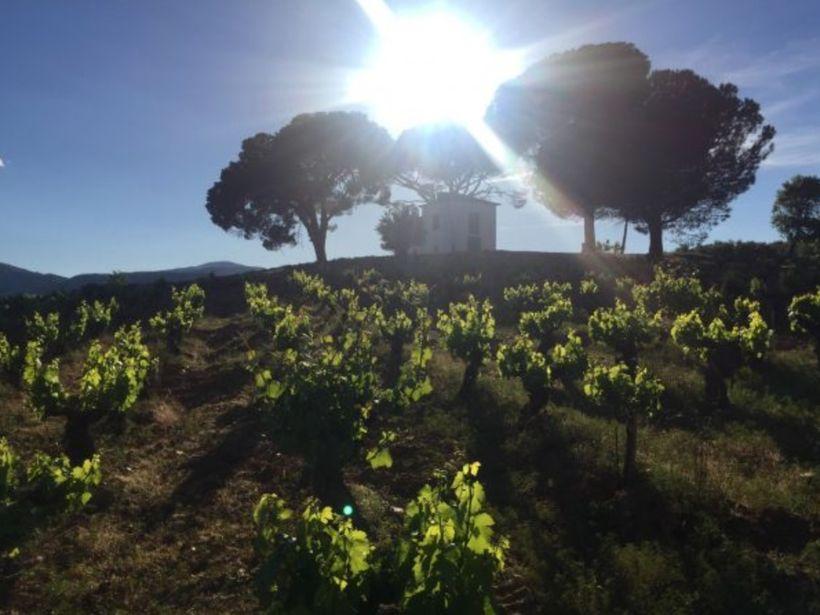 <em>Sunset from the vineyards of Merayo, Bierzo, Spain.</em>