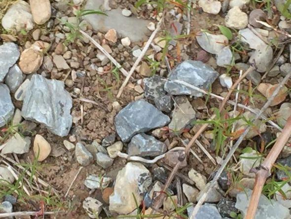 <em>Granite, slate, sand all part of the rich Bierzo soil</em>