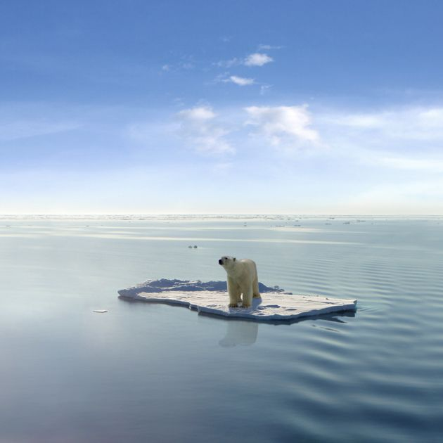 Polar bears depend on sea ice for