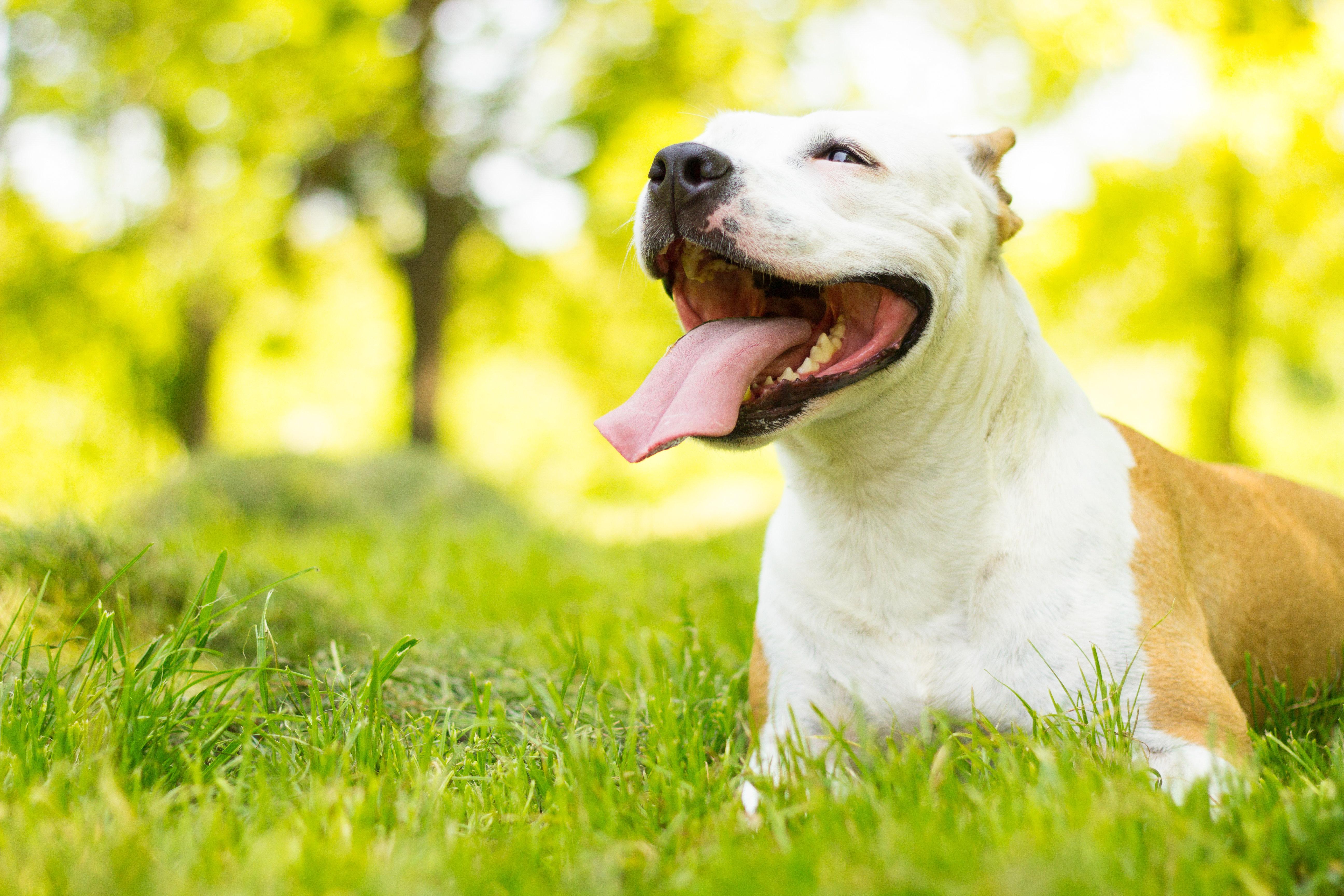 Smiling dog enjoying the beautiful sunny day
