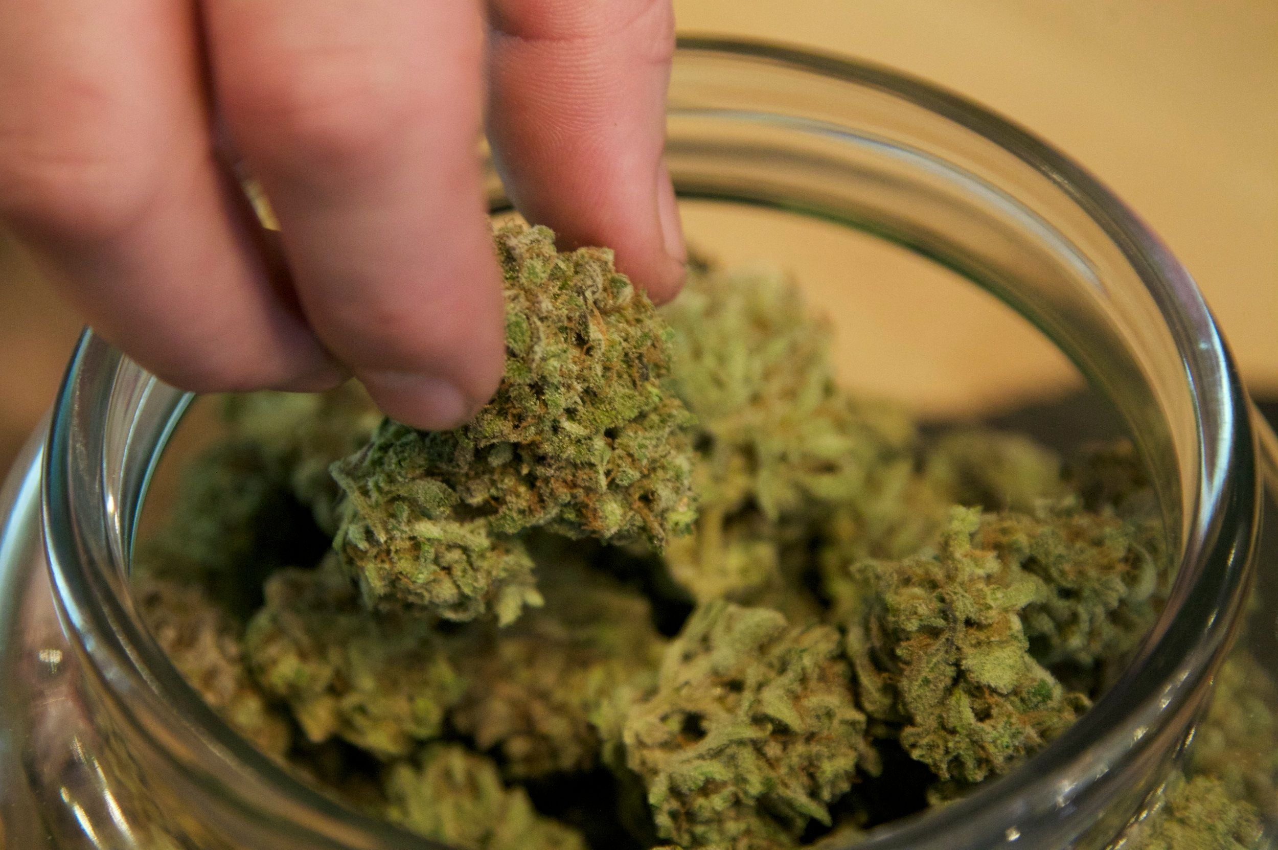 """Buds are removed from a container at the """"Oregon's Finest"""" medical marijuana dispensary in Portland, Oregon April 8, 2014. Over 20 Oregon cities and counties are moving to temporarily ban medical marijuana dispensaries ahead of a May deadline, reflecting a divide between liberal Portland and more conservative rural areas wary about allowing medical weed. Portland, Oregon's largest city, already has a number of medical marijuana clinics and has not moved to ban them. Picture taken April 8, 2014.  REUTERS/Steve Dipaola (UNITED STATES - Tags: DRUGS SOCIETY POLITICS HEALTH)"""
