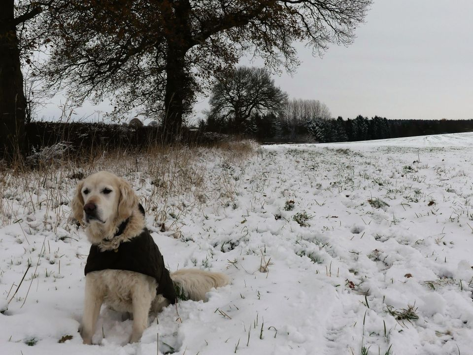 A dog in the snow in Kingstone, Staffordshire on Sunday