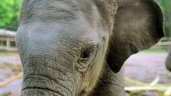 Κίνα: Άγριος ελέφαντας επιτίθεται σε