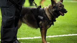 This Is What It's Like To Work With Police Dogs For A Day