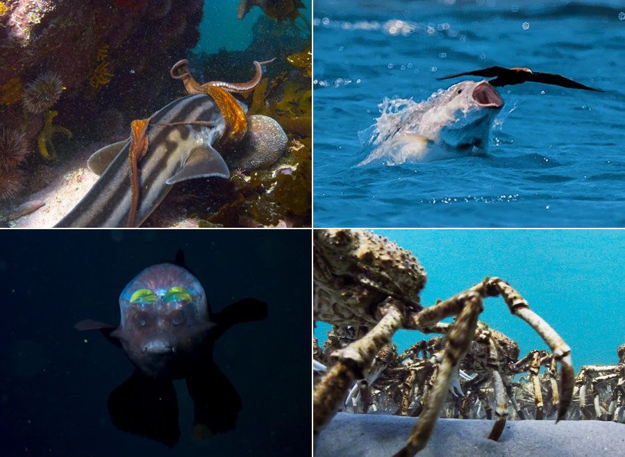 10 Astounding 'Blue Planet II' Moments That Took Our Breath