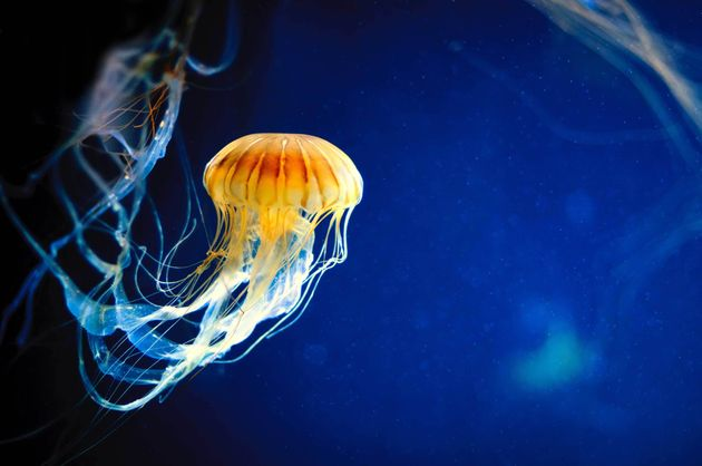 Jellyfish Have Superpowers - And Other Reasons They Don't Deserve Their Bad