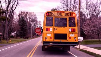 Rear view of a stopped bright yellow suburban New York State USA school bus with flashing red warning lights and outstretched flashing stop signs on a rural residential highway waiting for school children to get on board and sit down. This school bus model is very tall - with unusually high vehicle to ground clearance - and large windows with multiple emergency exit doors and hatches - all safety measures to protect passengers and enable quick emergency worker access and easy passenger removal in any potential crash with another vehicle. Per New York state law, all other traffic must stop in both directions and wait for a stopped school bus when the red lights are flashing.