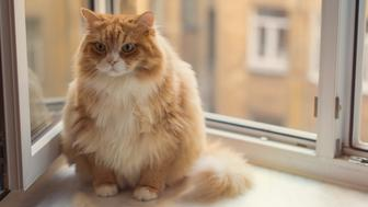 Fat angry ginger cat sitting on a window