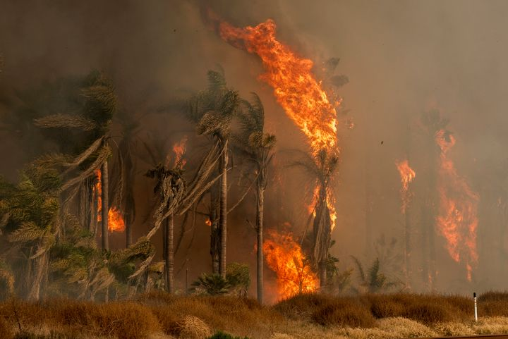 Palm trees explode into flames as the Thomas wildfire rages in Ventura, California, on Dec. 7.
