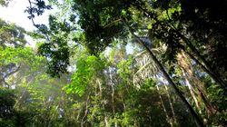 Γιατί τα δάση εξαπλώνονται στο δυτικό κόσμο ενώ στις φτωχότερες χώρες δεν