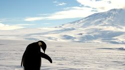 Βρέθηκαν απομεινάρια προϊστορικού πιγκουΐνου- γίγαντα, ύψους 1,77