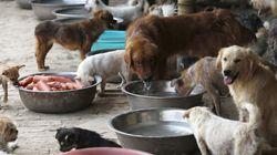 Κίνα: Πουλούσαν δηλητηριασμένες σύριγγες για δολοφονίες σκύλων με σκοπό να πουληθεί το κρέας