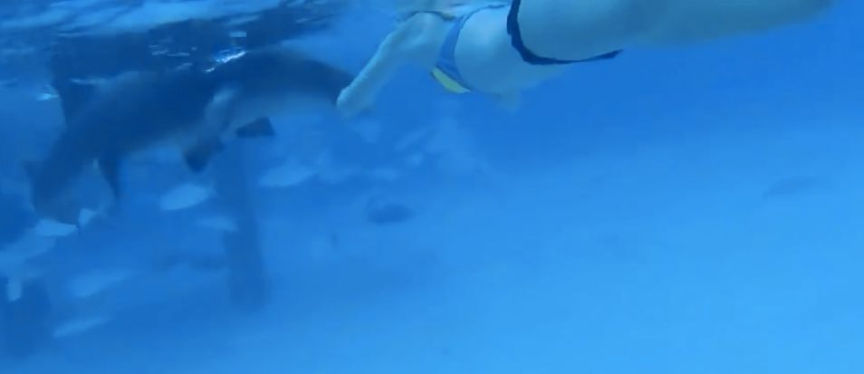 Shark Viciously Attacks Woman On Her