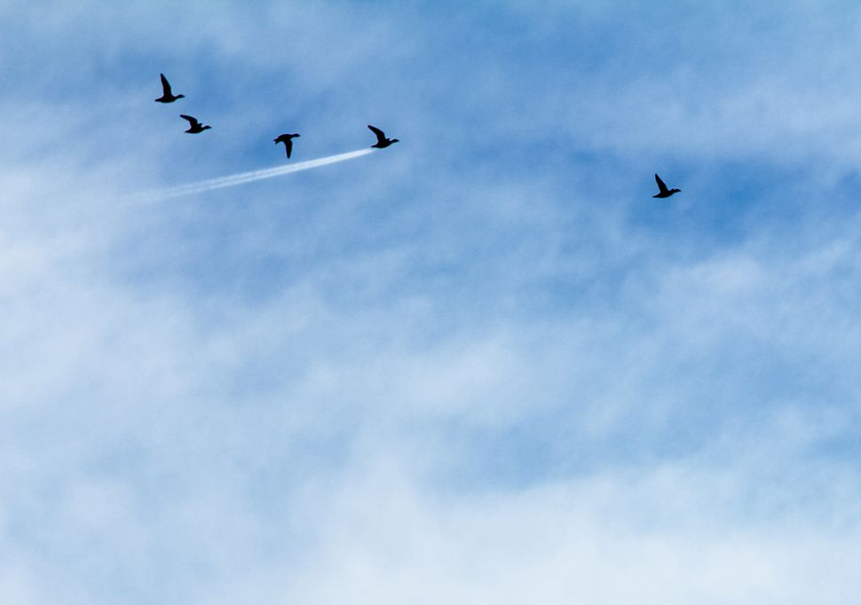 A group of wigeons flying in Preston, England, won the In The Air category.