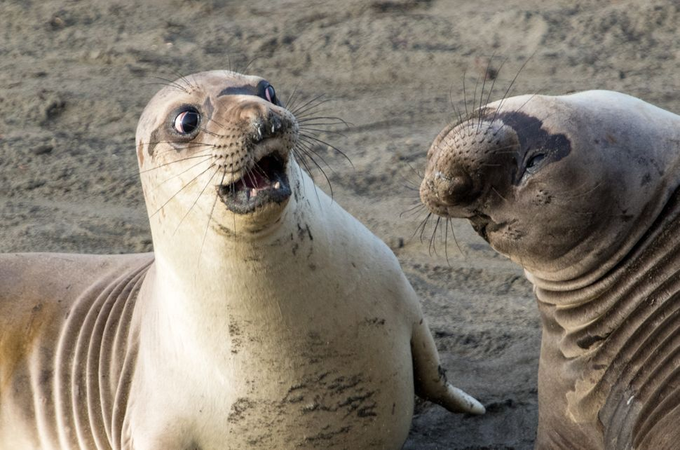 "A young elephant seal in San Simeon, California, looks shocked in George Cathcart's ""WTF?!"""