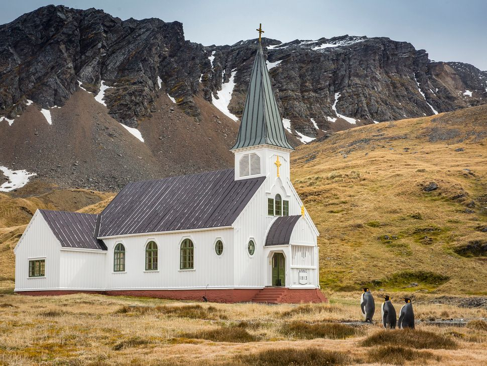 Three king penguins approach a church on South Georgia Island, near Antarctica.