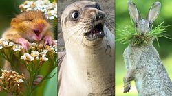 Las mejores fotos cómicas de animales de