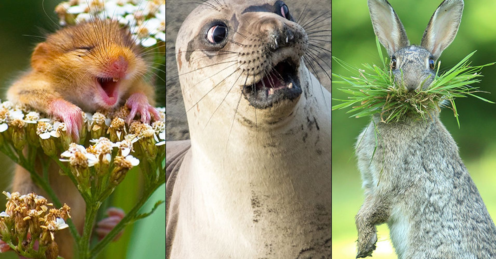 The Funniest Wildlife Photos Of 2017 Are Also Pretty Freakin' Adorable