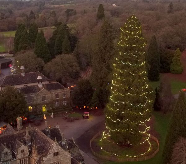 Britain's tallest living Christmas tree, a 110-foot giant redwood at Wakehurst in Ardingly, West Sussex.