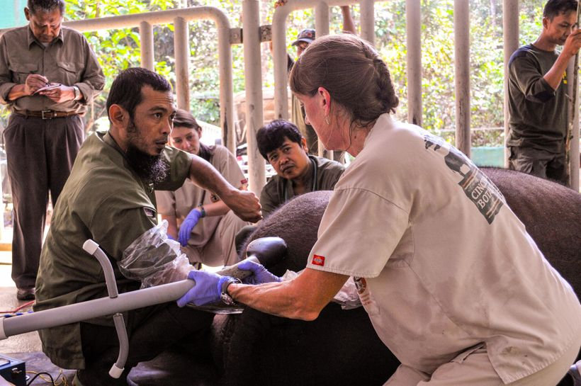 <em>Dr. Roth at the Sumatran Rhino Sanctuary collaborating with vet team</em>